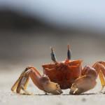 inkaico mancora vida marina
