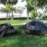 parque de las leyendas-tortugas