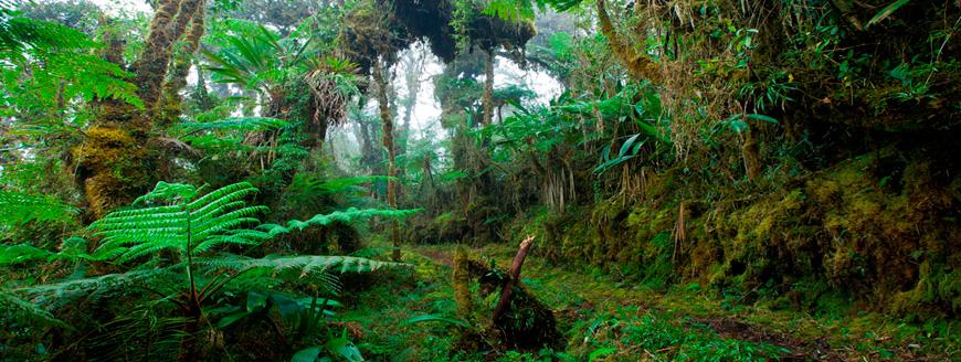 inkaico-parque-nacional-