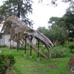 ballena-museo-de-historia-natural